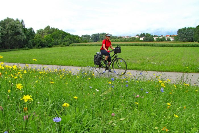 Cyclist on the Neckar cycle path
