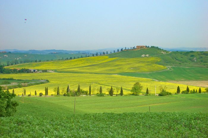 Tuscan landscape with yellow flowers