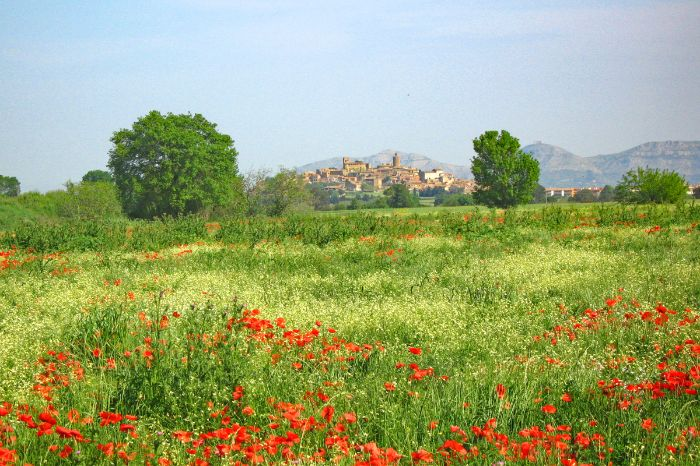 Meadow with poppies, in the background a city