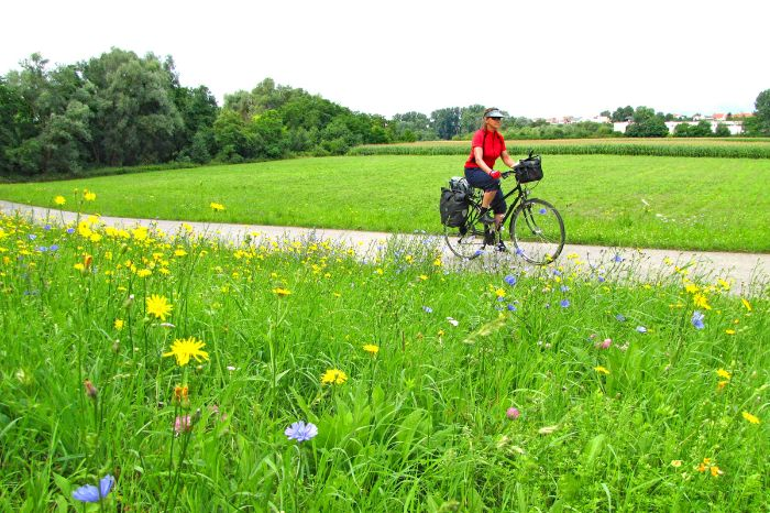 Cycle path through meadow with flowers in the Palatinate