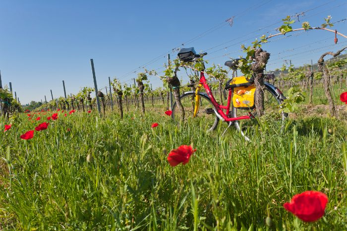 Bike in the middle of a poppy field in the Palatinate