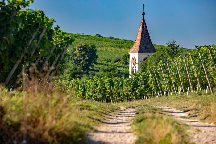 Cycle path through the vineyards of the Southern Black Forrest